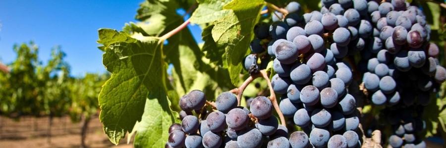 Сухой концентрат вина